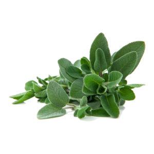 Olio Essenziale - Salvia