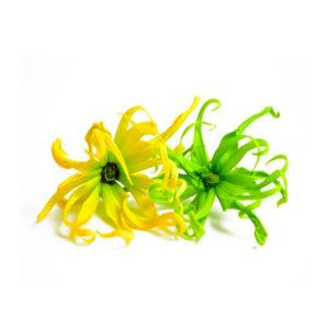 Olio Essenziale - Ylang Ylang